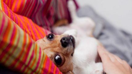 Как узнать может ли собака заразиться от человека простудой