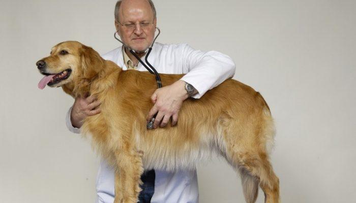 доктор с собакой
