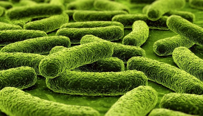 палочки туберкулеза