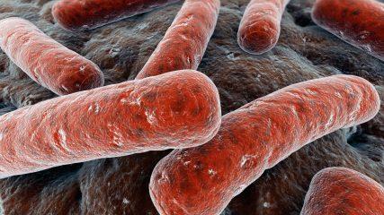 Сколько живет туберкулезная палочка и чего боится?