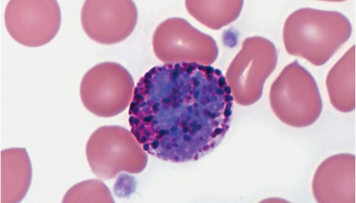 Норма анализа крови у мальчиков до 5 лет