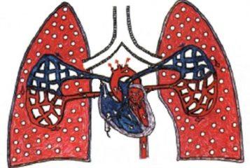 Анатомия легких: кровоснабжение