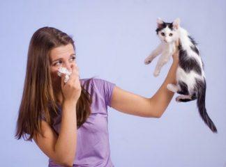 Бронхиальная астма и животные