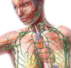 Подключичные лимфоузлы увеличены: причины