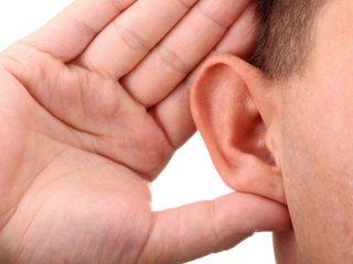 Где находятся рецепторы слуха?