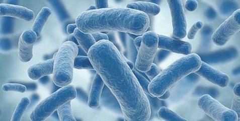 Что такое клебсиелла пневмония (klebsiella pneumoniae) и какие болезни вызывает?
