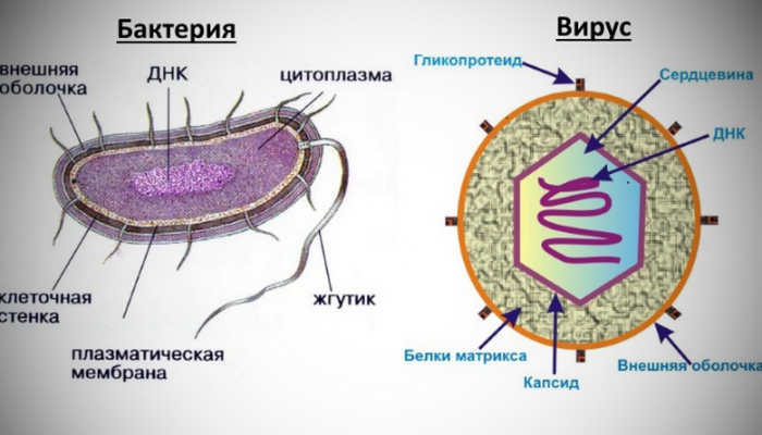 Анализ крови у ребенка при инфекции