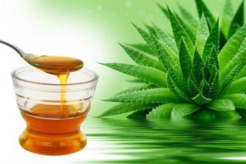 Лучшие рецепты алоэ с медом от кашля и для укрепления иммунитета