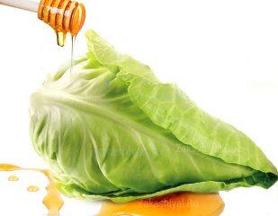 Лучшие рецепты компресса с капустным листом от кашля с медом