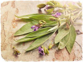 Как используется шалфей от кашля? Полезные свойства травы и лучшие рецепты